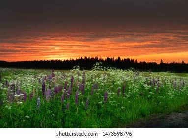 midsummer night sunset in sweden