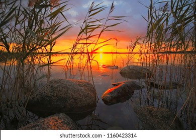 Midsummer sunset in reeds, reflecting on sea and rocks in southern Finland, Padva, Raseborg