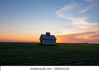 midwest barn at sunset with rows of soy beans glowing in the light
