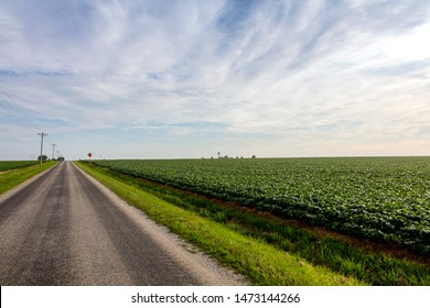 Midwest country road between corn field and soybean fields