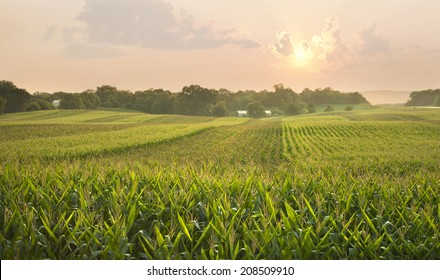 A midwestern cornfield glistens below the setting sun