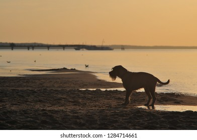 Miedzyzdroje, Poland, November 2018. Dog standing on the beach at sunset. Warm colors.