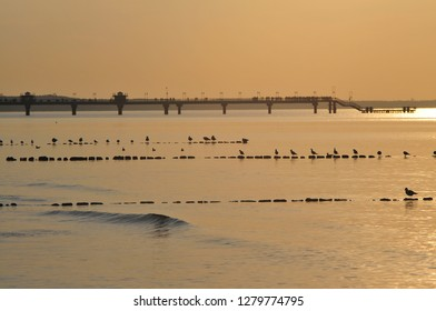 Miedzyzdroje, Poland, November 2018. Gulls standing in a row on the poles of the breakwater at sunset with a Miedzyzdroje pier in the background.