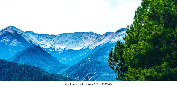 Mighty Alpine mountains with snow peaks. Green pine tree branches on foreground.