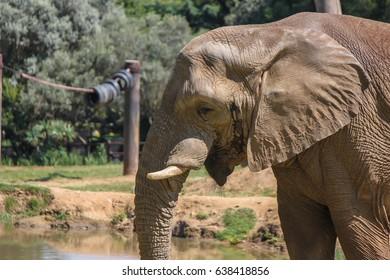The mighty elephant.