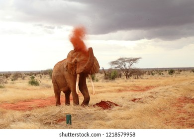 The mighty elephant takes a sand shower