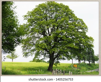 mighty tree before green meadow