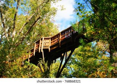 Mighty Wooden Bridge Through Forest