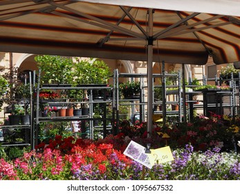 Migliarino, Italy - May 20, 2018. Fiera del fiore, Flower Fair. Stall selling plants and flowers.