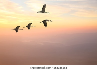 Migrating birds fly (flock,flight). Free cranes flying at sunrise. Foggy mountains landscape in the warm soft background. Wonderful world. Environment protection and travel. Freedom concept