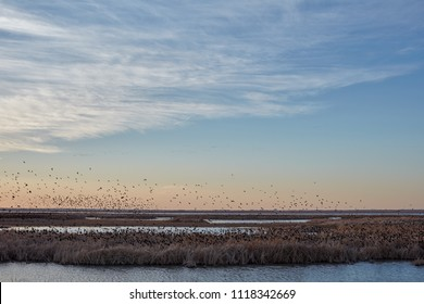Migrating blackbirds over Cheyenne Bottoms wetlands in Kansas at sunset silhouetted against an orange sky in a tranquil scenic landscape