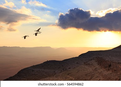 Migrating cranes fly ( flock, flight ).Free birds flying at sunset over the foggy mountains in the wild. Nature migration. Wonderful world. Environment protection and travel concept