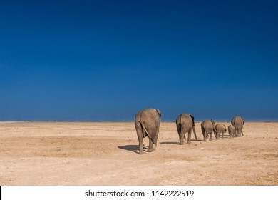 Migration of elephants. Africa. Kenya. The elephants go by the column. Journey through Africa. Family of elephants. Animals in Kenya. Desert. Elephants go through the desert.