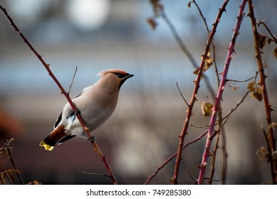 a migratory bird sits on a branch in autumn