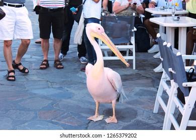 Mikonos Pelican Greece