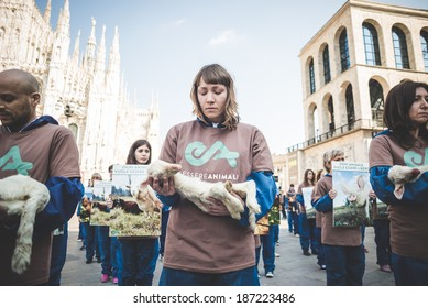 MILAN, ITALY - APRIL 13: Essere Animali protest on April, 13 2014: a group of activists of animal rights association 'Essere Animali' performed with real dead lambs in city center before easter