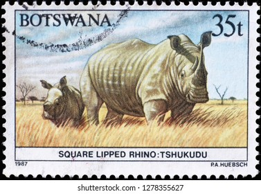 Milan, Italy – December 11, 2018: White rhino and baby on stamp of Botswana
