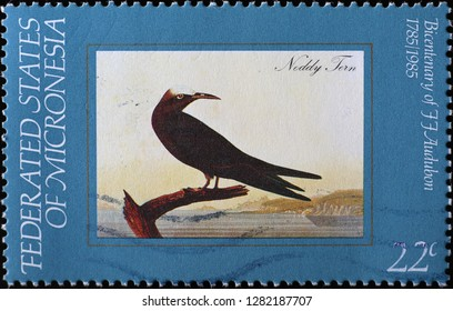 Milan, Italy – December 12, 2018: Noddy tern in ancient painting by Audubon on stamp