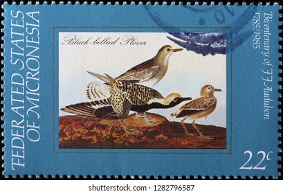 Milan, Italy – December 12, 2018: Black-bellied plovers by Audubon on postage stamp