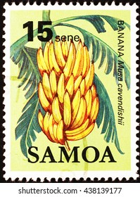 Milan, Italy - January 26, 2014: Bunch of bananas on samoan postage stamp