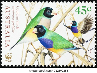 Milan, Italy - September 1, 2017: Wonderful gouldian finches on australian postage stamp