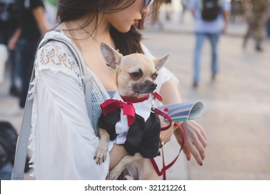 MILAN, ITALY - SEPTEMBER 24: People during Milan Fashion week, Italy on SEPTEMBER 24, 2015. Eccentric and fashionable people waiting models and vips outside city during fashion week with chihuahua