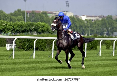 MILAN, ITALY-JUNE 16, 2002: race horses at the racecourse, in Milan.