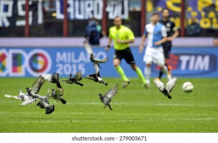 MILAN, ITALY-MAY 03, 2015: pigeons flying on the soccer pitch of the san siro soccer stadium, during the Italian serie A match FC Internazionale vs Chievo Verona, in Milan.
