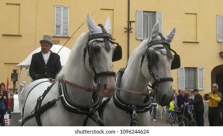 Milan,Italy-May 2018: White Horse Carriage with Coachman in Tait Tight Suit for Wedding