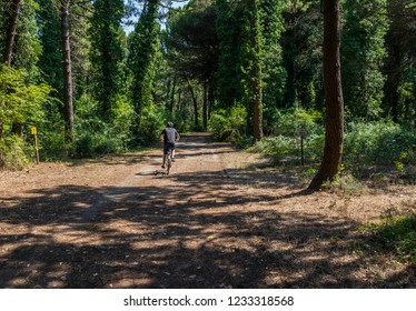 Milano Marittima, Italy - July 13, 2018: Boy cycling in the pine forest.