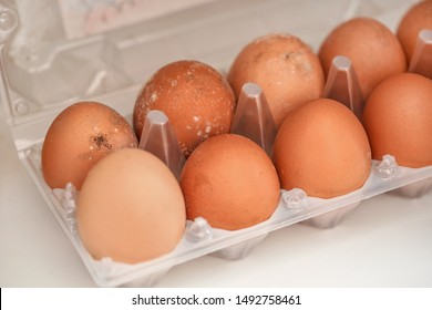 Mildew growing on rotten eggs stored in wet fridge for long time. Mouldy food gone bad