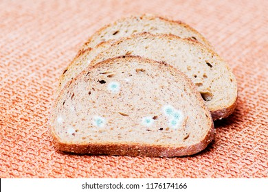 Mildew on a slice of bread. Stale bread, covered with mildew
