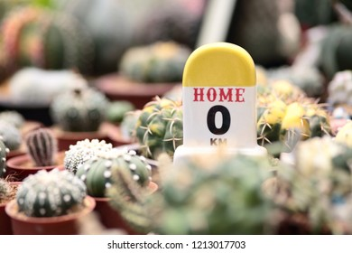 Mileage sign Simulated for use in garden decoration. Placed in the midst of a cactus planted in a greenhouse.