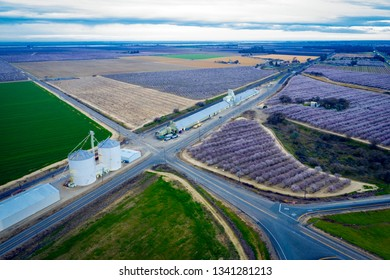 Miles of rows of blooming almond trees in Central California near Sacramento, aerial view