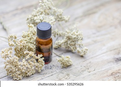 Milfoil Dry Medical Herb Essential Oil Spa Phytotherapy Aromatherapy with copy space