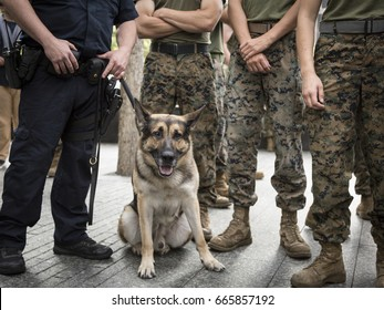 Military Freedom Run: U.S. Marine Corps personnel with a member of the NYPD Transit Bureau Canine Unit after the Freedom Run to the National September 11 Memorial site Fleet Week, NEW YORK MAY 26 2017