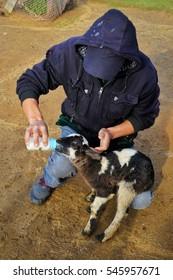Milk feeding