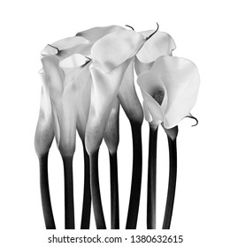 milk glass flower, fineart black and white photography, ornamental flowersfine art ornamental flowers II