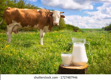 milk in glass and jug on wooden stump with grazing cow on the meadow as background