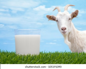 Milk in glass on grass with goat and sky in background