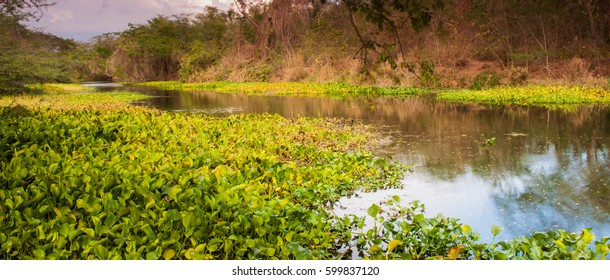 Milk River, Clarendon Jamaica