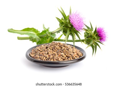 Milk thistle flowers with seeds. Isolated.
