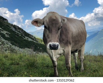 Milka cow with blue sky