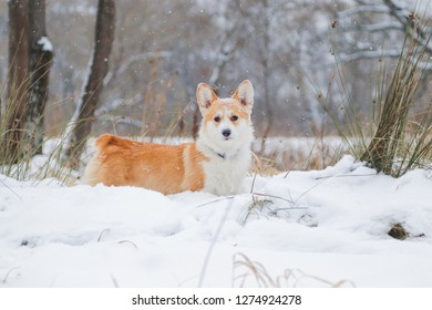 Milka turned out very well in the photo, walked smartly on this snowy day