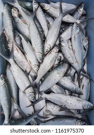 Milkfish processed food in the Philippines and Thailand