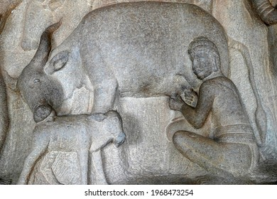 Milking of cow with its cattle by a man is depicted as the bas relief sculpture in Mahabalipuram, Tamilnadu. Indian rock art of ancient historical animal sculptures at rock cut temples in Tamil nadu. - Shutterstock ID 1968473254