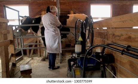 Milkmaid milking cow at dairy farm. Milking a cow with automatic milking machine at small dairy farm. Farming, technology, industrial production concept.