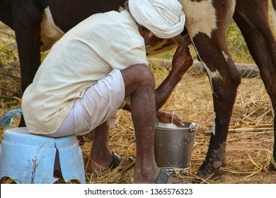 Milkman milking the cow in a bucket