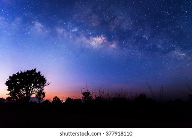 The milky way above a tree before sunrise. Stars on the colorful night sky.