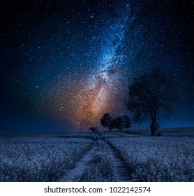 Milky way and field with trees in summer